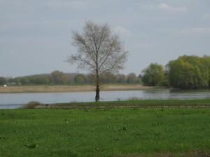 Landschaft an der Elbe